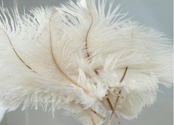 pštrosí peří-ozdoba, délka 13-20cm